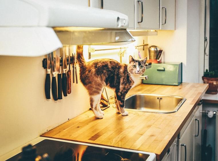 Cat in modern kitchen