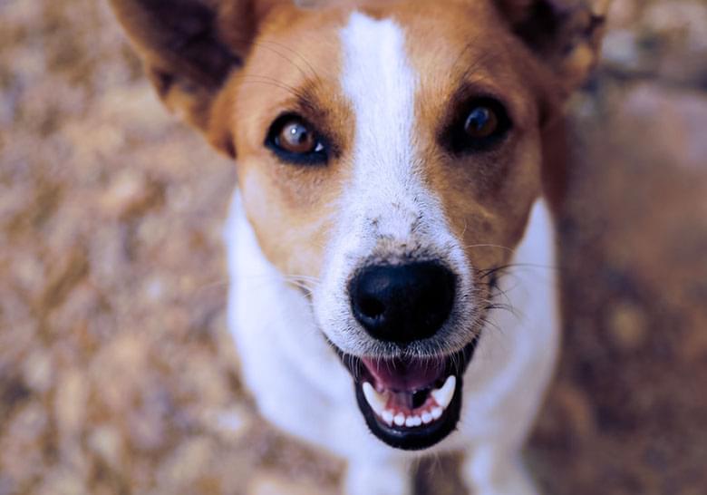 Puppy smiling up at camera