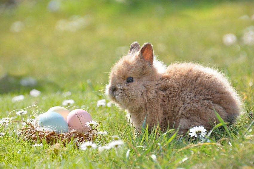 bunny beside easter eggs