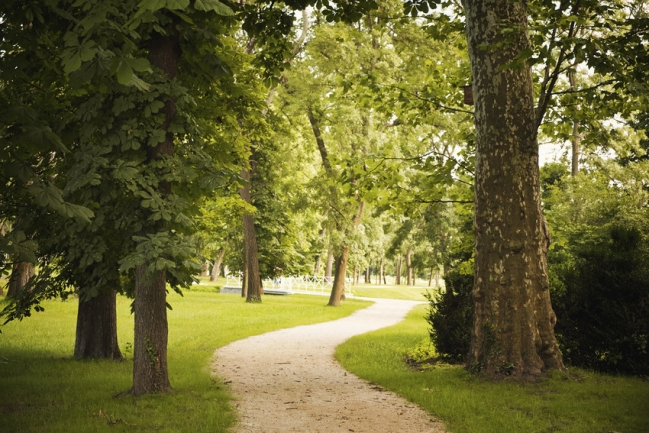 Explore scenic woods and trails in Lochmere Cary.
