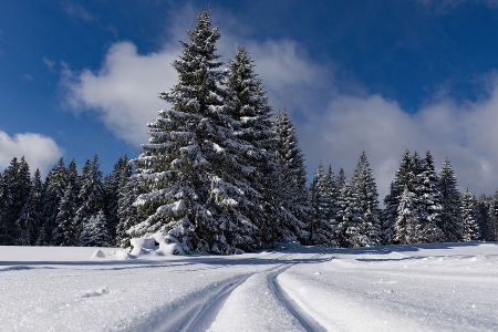 A pair of ski trenches in the snow with an evergreen tree in the background.